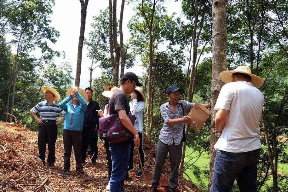 Successful stewardship in many forests